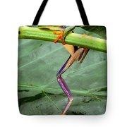 A Red-eyed Tree Frog, Agalychnis Tote Bag