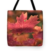 A Red Fall  Tote Bag