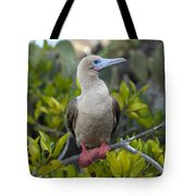 A Red-footed Booby Sula Sula Galapagos Tote Bag