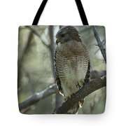 A Red Shouldered Hawk Perches In A Tree Tote Bag