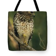 A Red Shouldered Hawk Perches On A Tree Tote Bag
