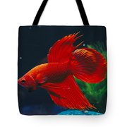 A Red Siamese Fighting Fish In An Tote Bag