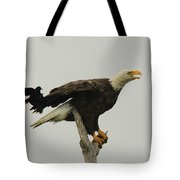 A Red Wing Black Bird Attacks A Bald Tote Bag