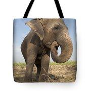A Rescued Asian Elephant Eats Sugar Tote Bag