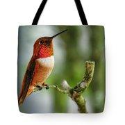A Rufous Hummingbird Perched Tote Bag