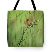 A Scarlet Grosbeak Perched On Grass Tote Bag