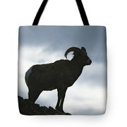 A Silhouetted Bighorn Sheep Standing Tote Bag