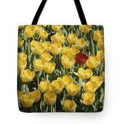 A Single Red Tulip Among Yellow Tulips Tote Bag