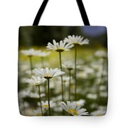 A Small Group Of Daisies Stands Tote Bag