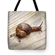 A Snail Sliding Across A Wooden Surface Tote Bag by Tom Gowanlock