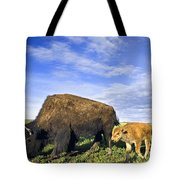 A Sow Bison Guides Her Calves On A Walk Tote Bag