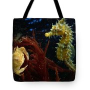 A Spotted Young Blue Crab, Callinectes Tote Bag