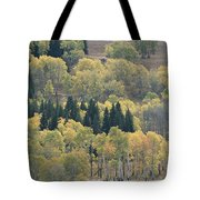 A Stand Of Aspen And Evergreen Trees Tote Bag