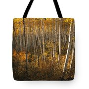 A Stand Of Aspen Trees Displaying Tote Bag