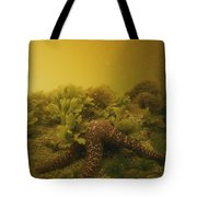 A Starfish In Waters Clouded By A Red Tote Bag