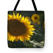 A Sunflower Bows To Its Own Weight Tote Bag