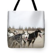 A Team Of Dogs Pull A Cart Tote Bag