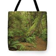 A Trail Cuts Through Ferns And Shrubs Tote Bag