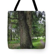 A Tree Divided Tote Bag