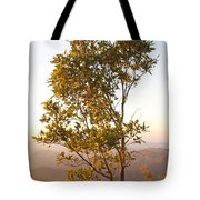 A Tree Outlined By The Rays Of The Setting Sun At Pachmarhi Tote Bag
