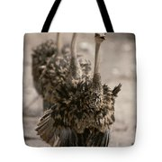 A Trio Of Ostriches, Struthio Camelus Tote Bag