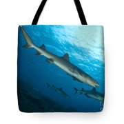 A Trio Of Whitetip Reef Sharks, Kimbe Tote Bag