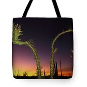 A View At Twilight Of A Boojum Tree Tote Bag