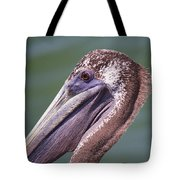 A Young Brown Pelican Tote Bag