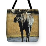 A Young Bull Moose Tote Bag