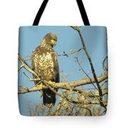 A Young Eagle Gazing Down  Tote Bag
