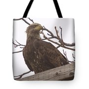 A Young Eagle In The Midst Of Change  Tote Bag