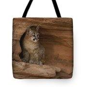 A Young Mountain Lion Rests In A Rocky Tote Bag