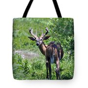 Acadia Buck Tote Bag