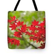 Acer Leaves Tote Bag