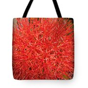 African Blood Lily Or Fireball Lily Tote Bag