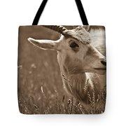 African Grassland Feeder 2 Tote Bag