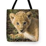 African Lion Panthera Leo Five Week Old Tote Bag