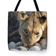 African Lion Panthera Leo Raiding Tote Bag