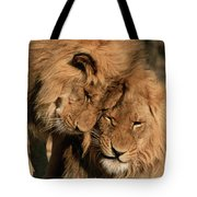 African Lion Panthera Leo Two Males, Mt Tote Bag