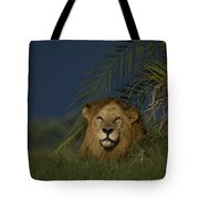 African Lion Resting Near A Palm Tote Bag