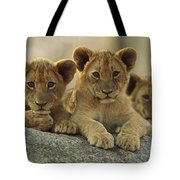African Lion Three Cubs Resting Tote Bag by Tim Fitzharris