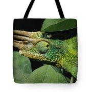 African Male Jacksons Chameleon Tote Bag