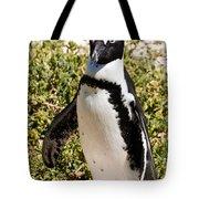 African Penguin Tote Bag