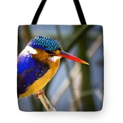 African Pigmy Kingfisher Tote Bag
