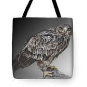 African Tawny Eagle Tote Bag