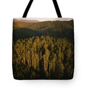 Afternoon Sunlight Bathes Redwood Trees Tote Bag