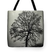 Age Old Tree Tote Bag