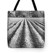 Agriculture-soybeans 6 Tote Bag