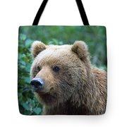 Alaskan Brown Bear Tote Bag