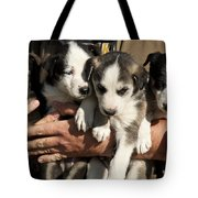 Alaskan Huskey Puppies Tote Bag by John Greim